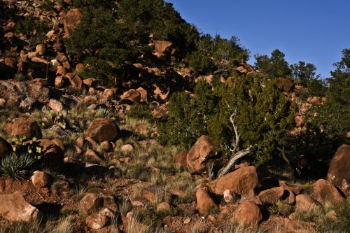 Red Rocks And Tree