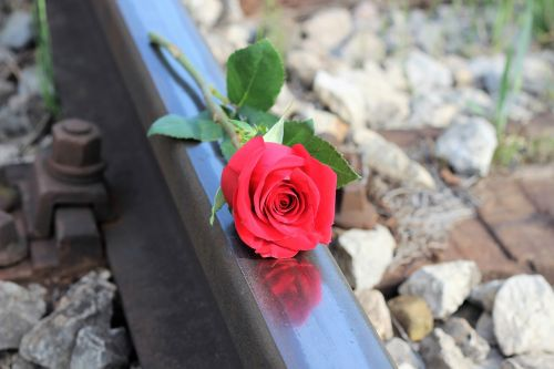 red rose railway stop suicide