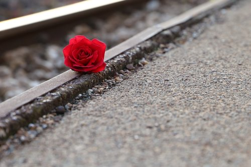 red rose near rail  remembering all victims  of suicide on rail