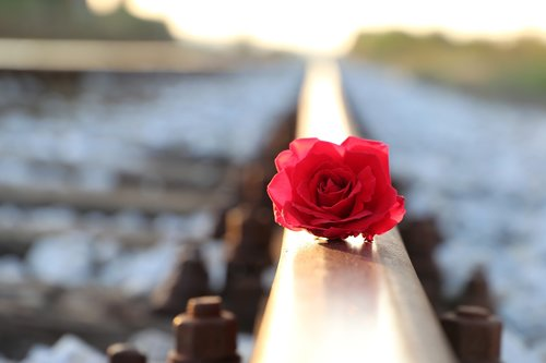 red rose on rail  lost love  remembering