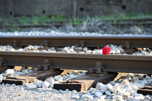 red rose on railway accident tragedy