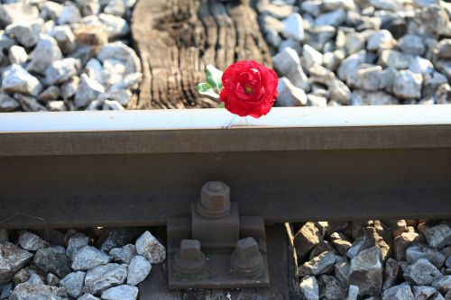 red rose on railway crossing accident drive carefully