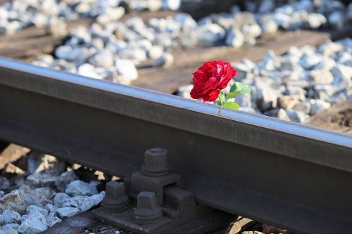 red rose on railway crossing tragedy drive carefully