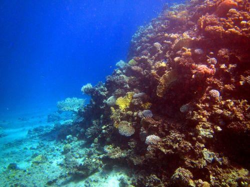 red sea coral fish