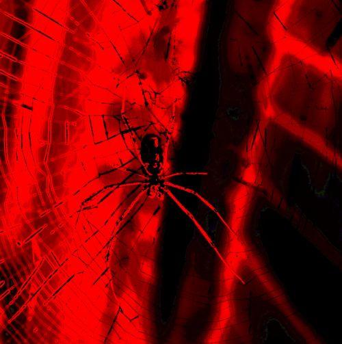voras, internetas, spausdinti, juoda, raudona, raudonas voras spausdinti
