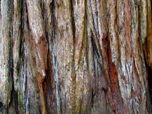 red wood bark tree