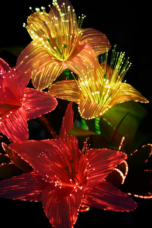 Red Yellow Light Flowers