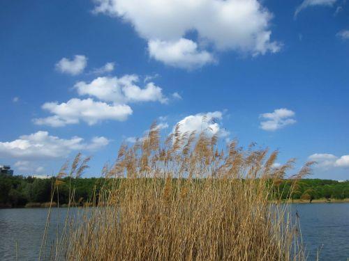 reed pond clouds