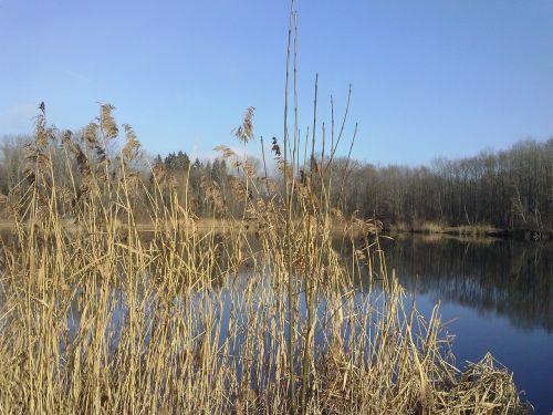 reed lake mirroring