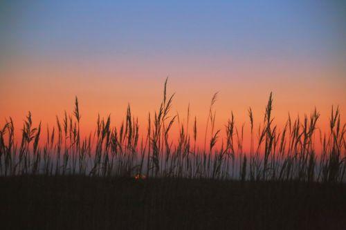 reed reeds glow