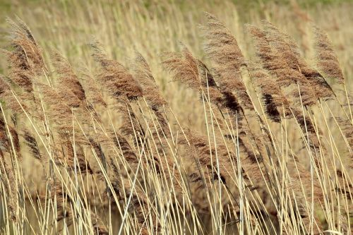 reed dry blow