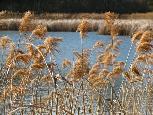 reed pond spring