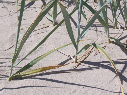 reed sand beach