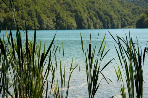 reed water summer
