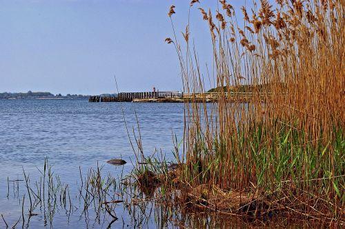 reed reed belt landscape
