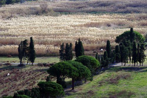 reeds calabria campaign