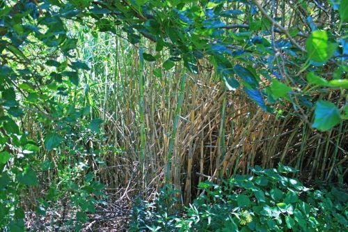 Reeds Amongst Other Vegetation