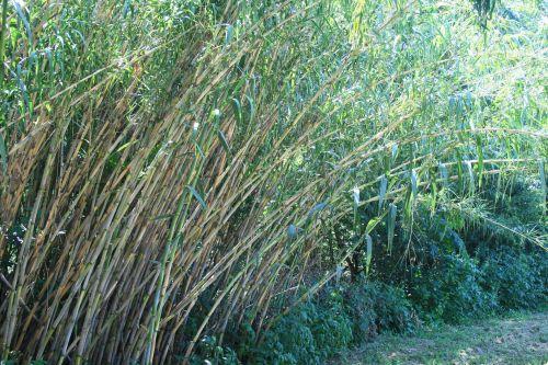 Reeds Bending Over