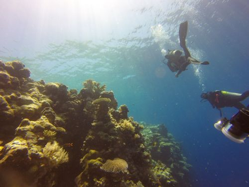 reef diving palau