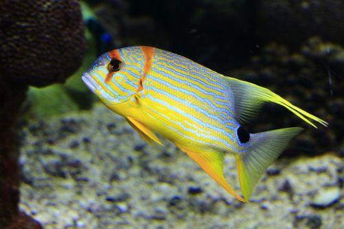 reef sea underwater