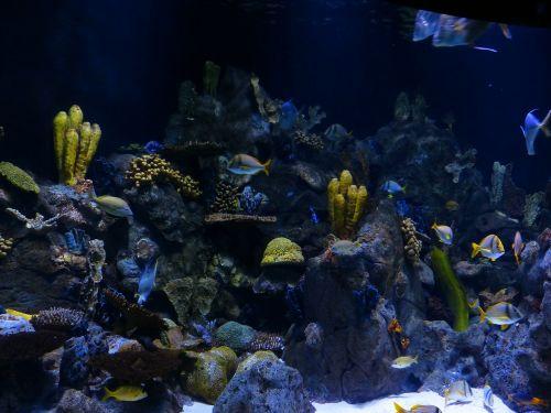 reef coral reef sponges