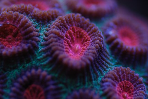 reef tank  sps  corals