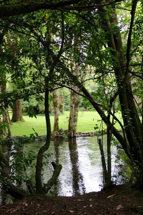 atspindys,ramus,veidrodis,veidrodinis atspindys,miškas,parkas,medžiai,žolė