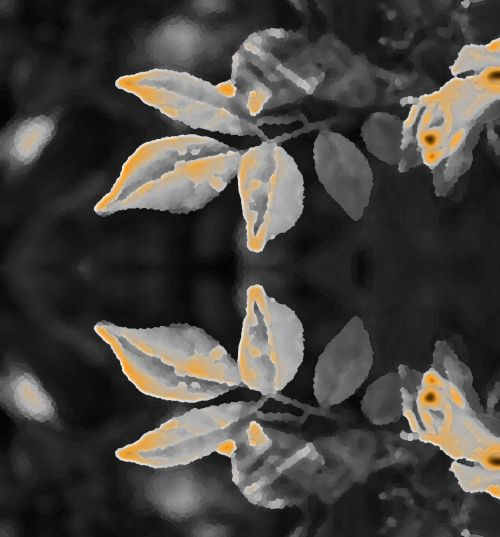 Reflection Of Tinted Leaves