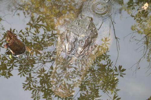 Reflective Gator