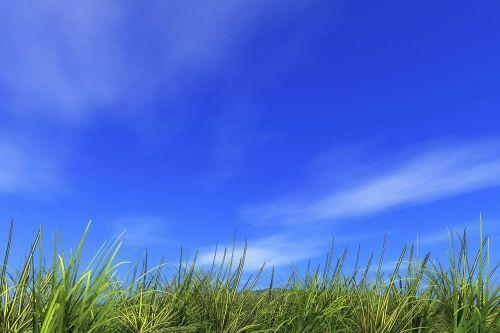 refreshing hill field