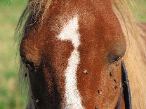 Facing A Horse