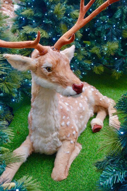 reindeer antlers animal