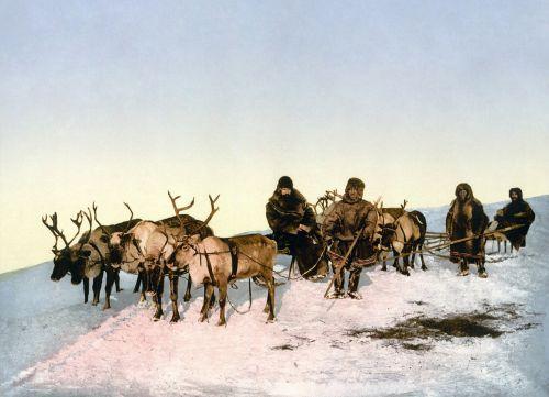 reindeer slide reindeer sleigh