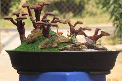 reishi landscape ganoderma lucidum land scape linhzi bonsai