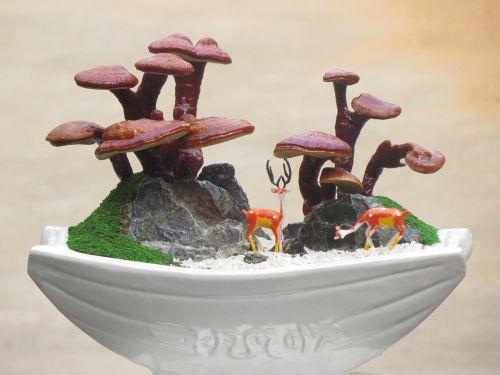 reishi landscape ganoderma lucidum land scape miniatures ganoderma