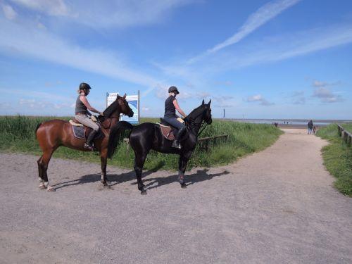 reiter horses north sea