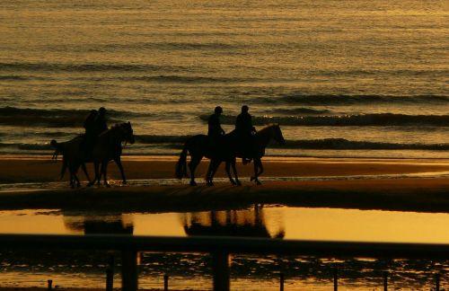 reiter ride horse