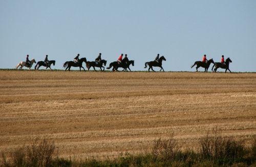 reiter horses ride