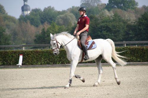 reiter horse dressage