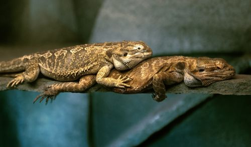 relaxation reptiles love