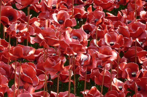 remembrance  centenary  poppies