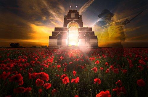 remembrance day  veterans day  poppy field