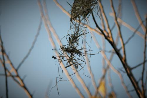 Remnants Of Weaver's Nest