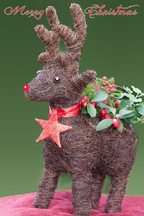 ren reindeer greeting card
