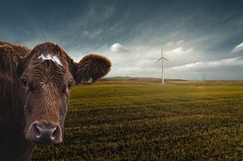 renewable energy  wind power  climate change