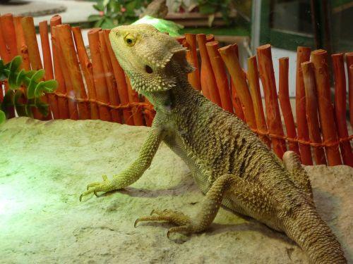 reptile nature picture