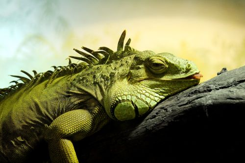 reptile animals exotic