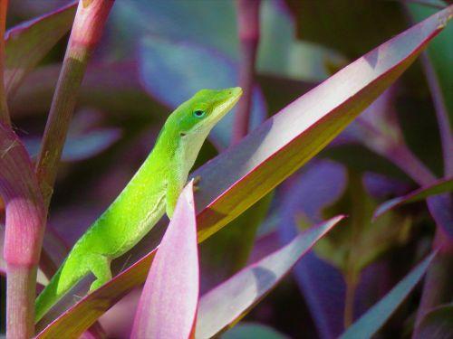 reptile lizard green