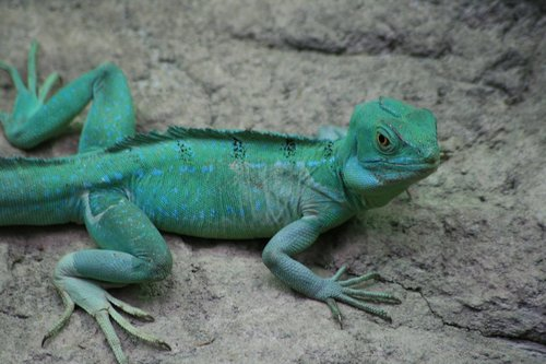 reptile  green  lizard