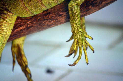 Reptile Claw
